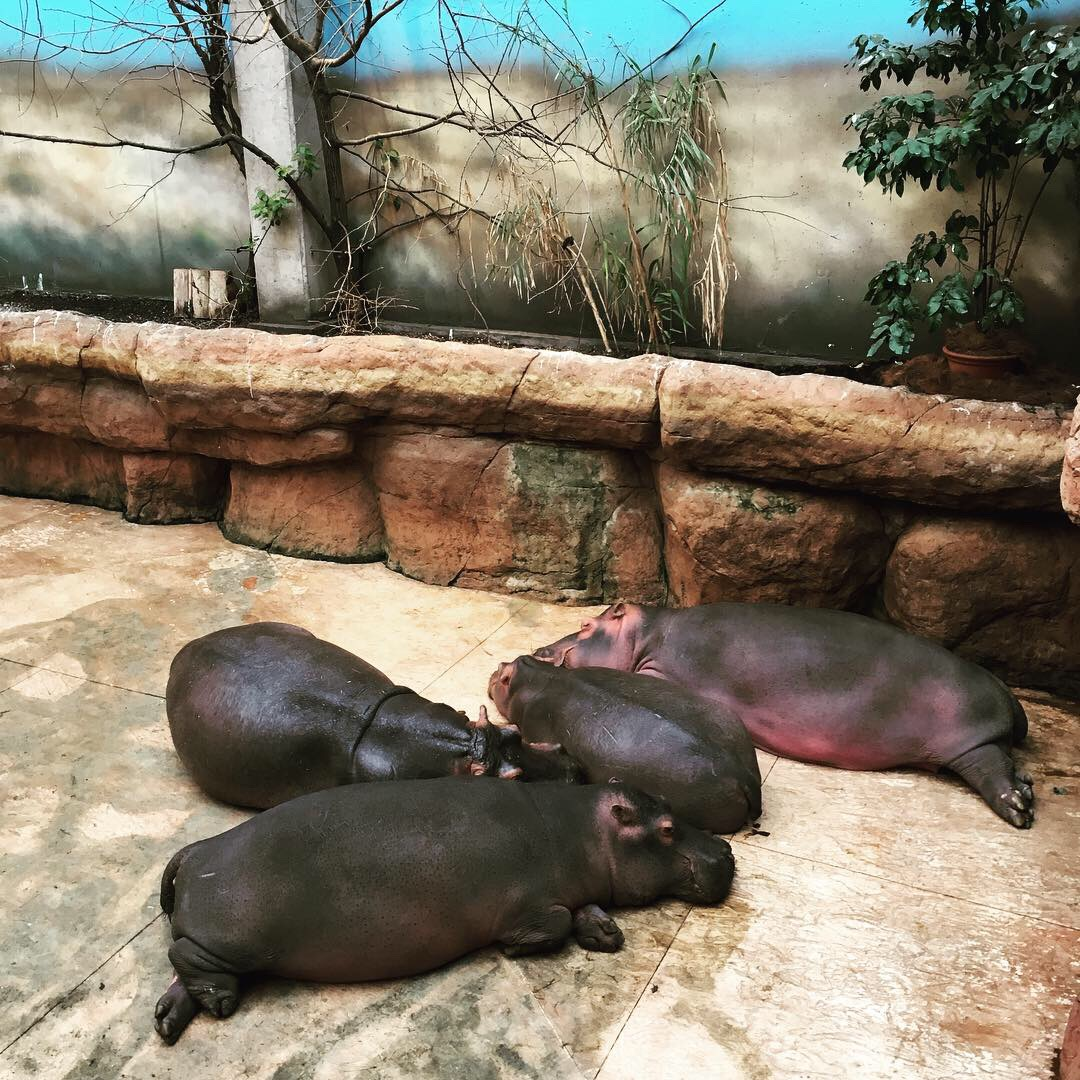 Wroclaw eläintarha