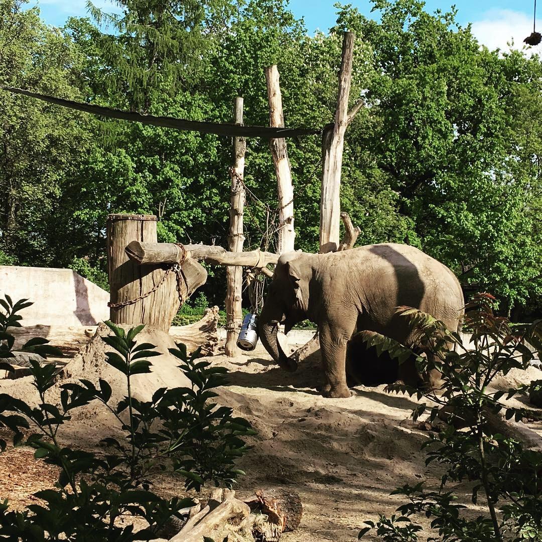 Wroclaw zoo elephant