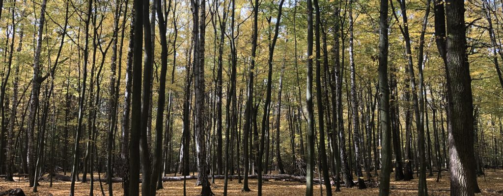 Warsaw forest