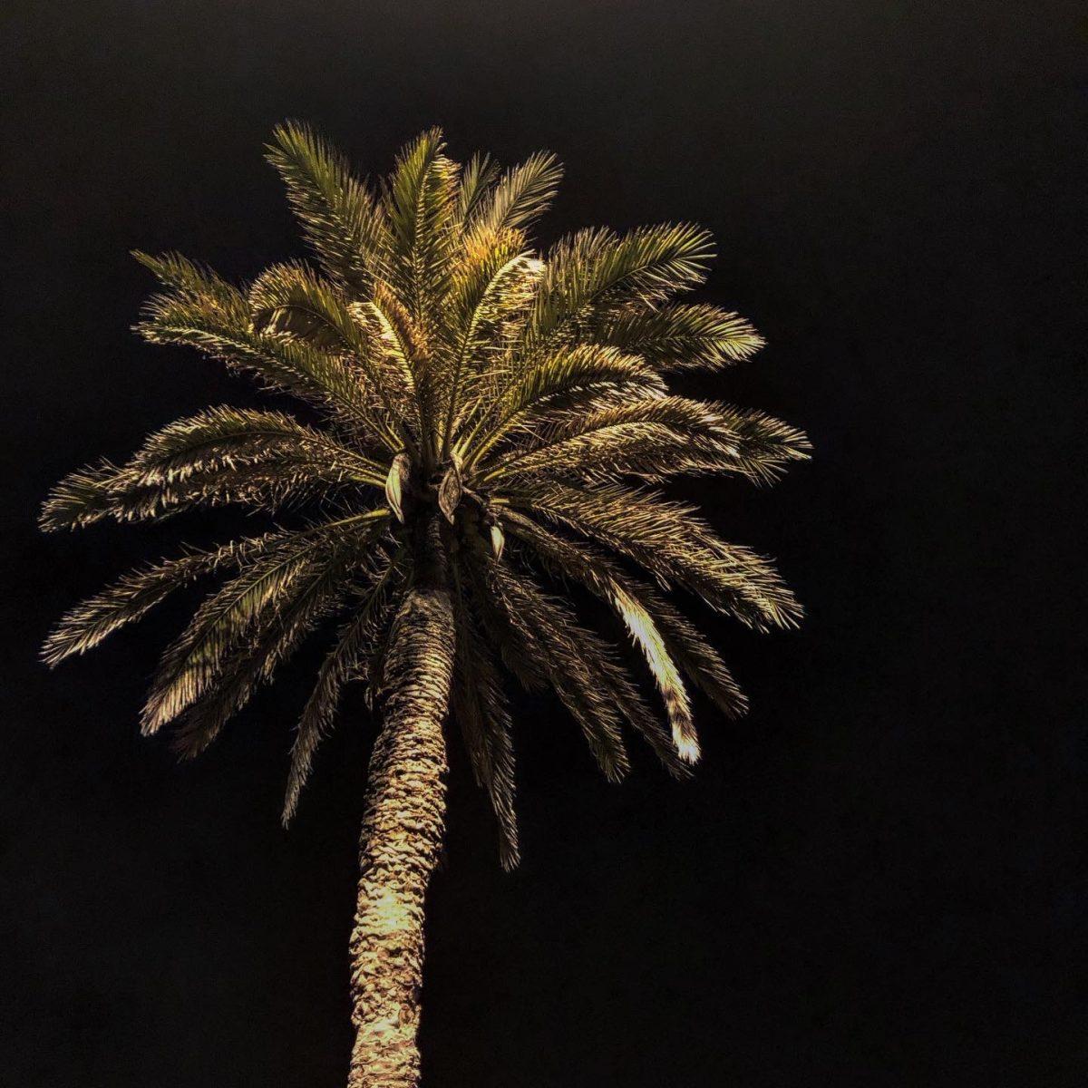 barcelona yö palmu