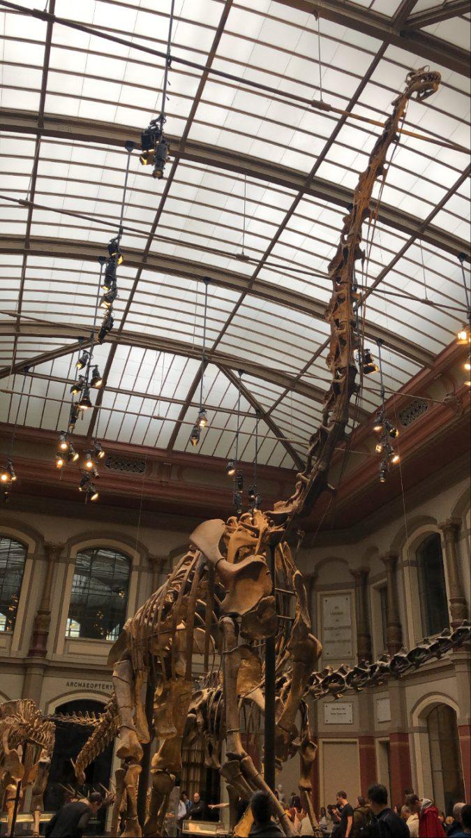 Brachiosauruksen luuranko
