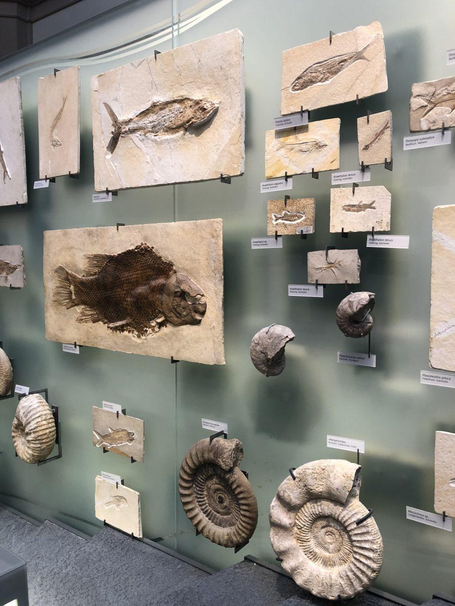 fossiili berliini