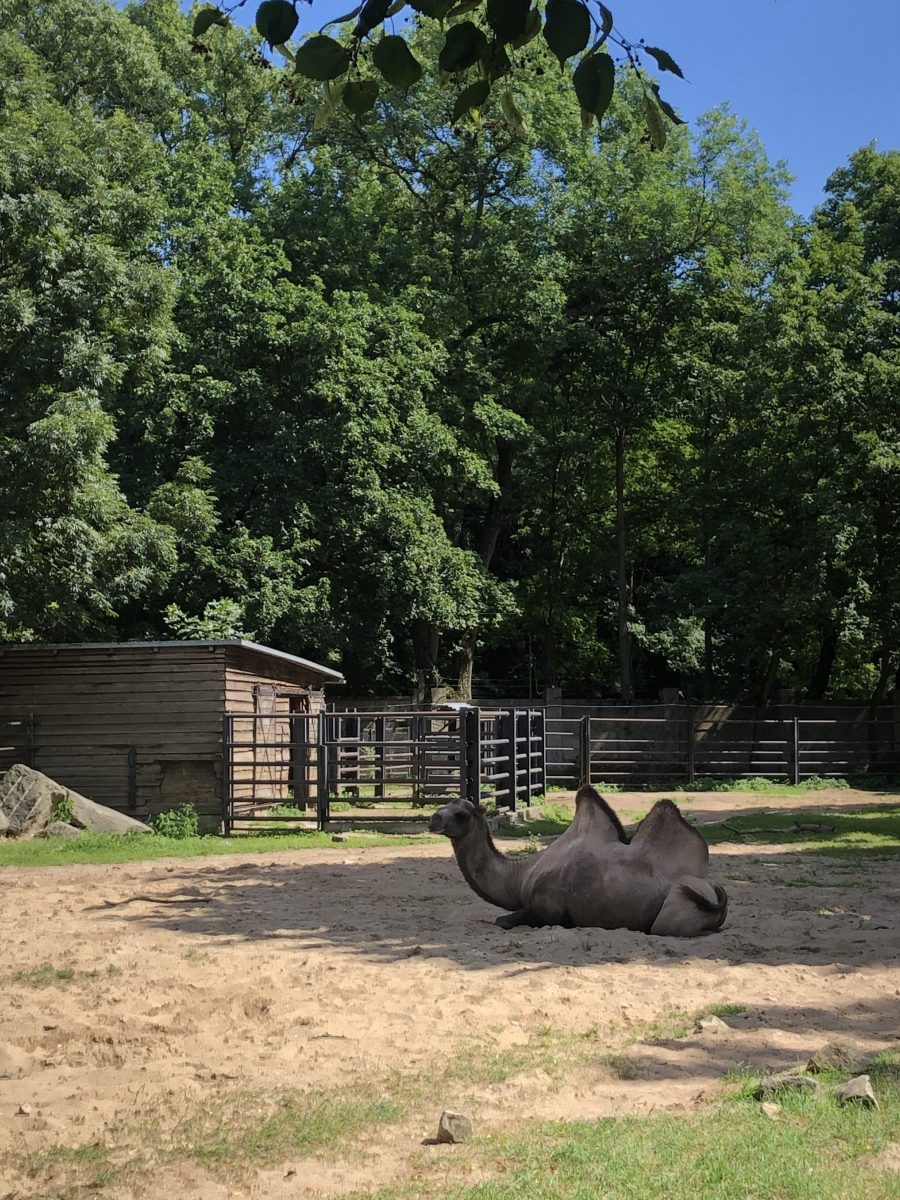 lodz eläintarha kameli
