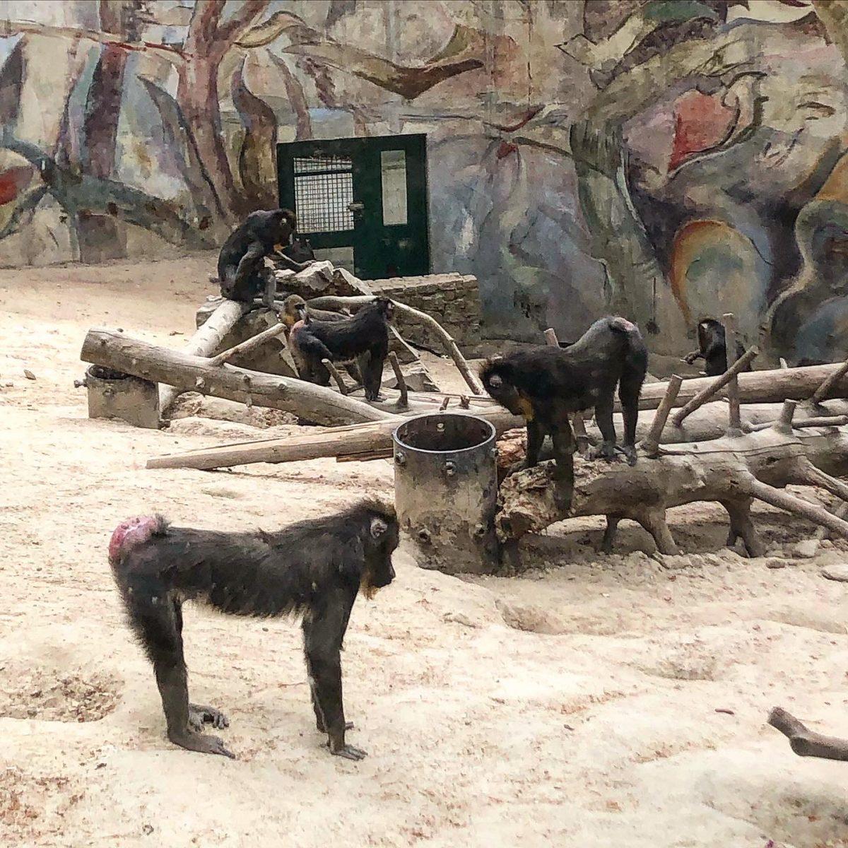 puolan eläinpuisto