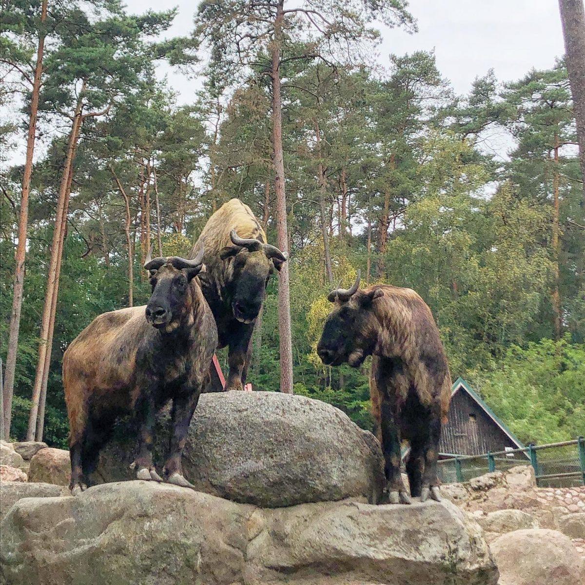 gdansk eläintarha