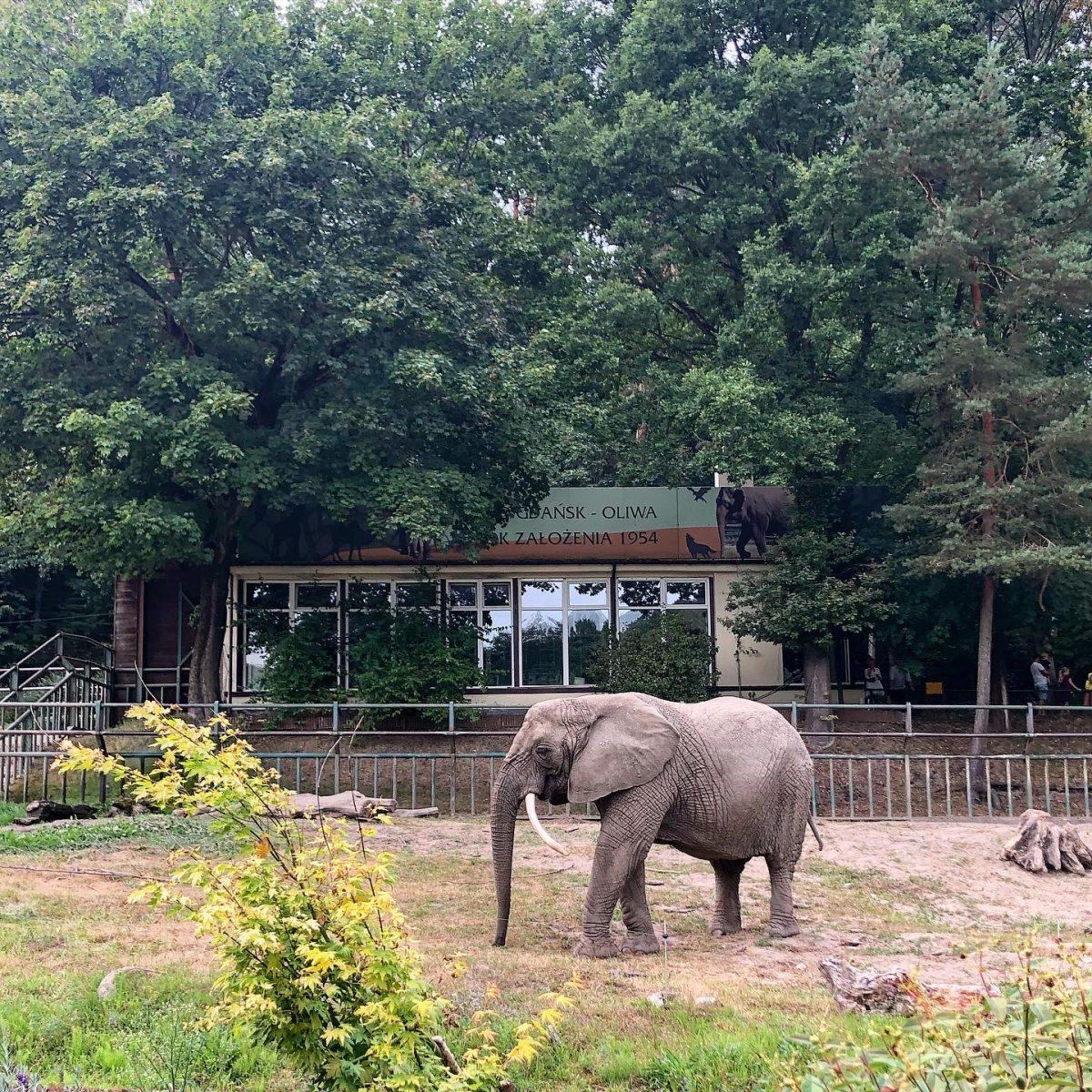 elefantti puola